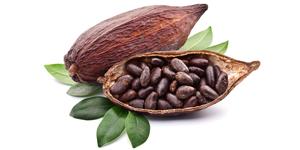 5 características del cacao que no conocías